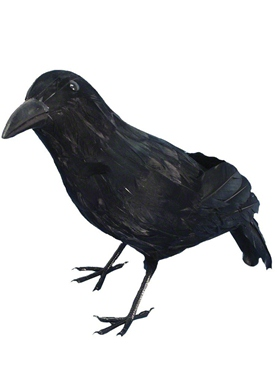 Realistic Feathered Crow Black