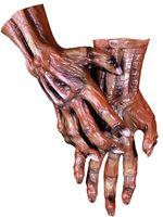 Adult Deluxe Corpse Zombie Hands [DU960]
