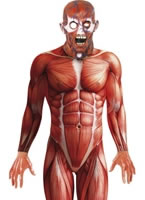 Adult Anatomy Man Costume